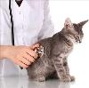 Ветеринарные клиники в Измалково